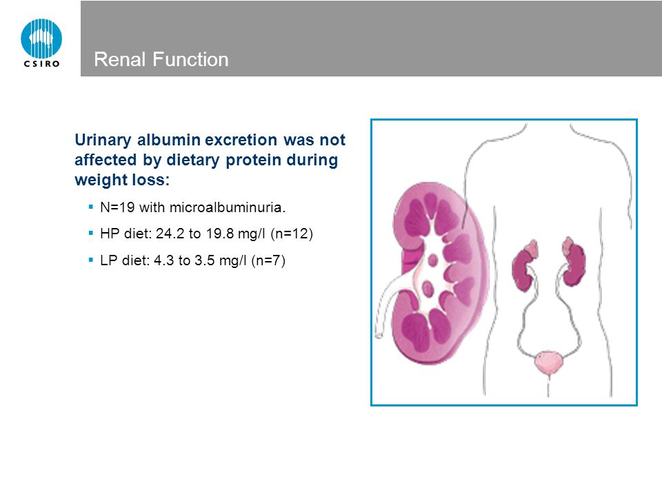Renal Function Urinary albumin excretion was not affected by dietary protein during weight loss: N=19 with microalbuminuria.