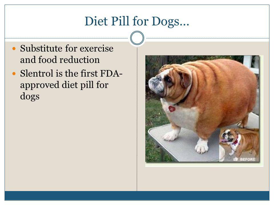 Diet Pill for Dogs… Substitute for exercise and food reduction Slentrol is the first FDA- approved diet pill for dogs