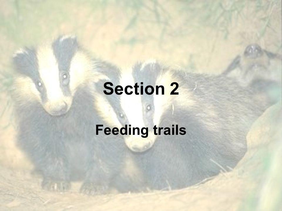 Section 2 Feeding trails