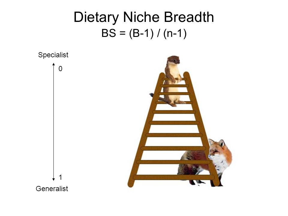 Dietary Niche Breadth BS = (B-1) / (n-1) Specialist Generalist 0 1