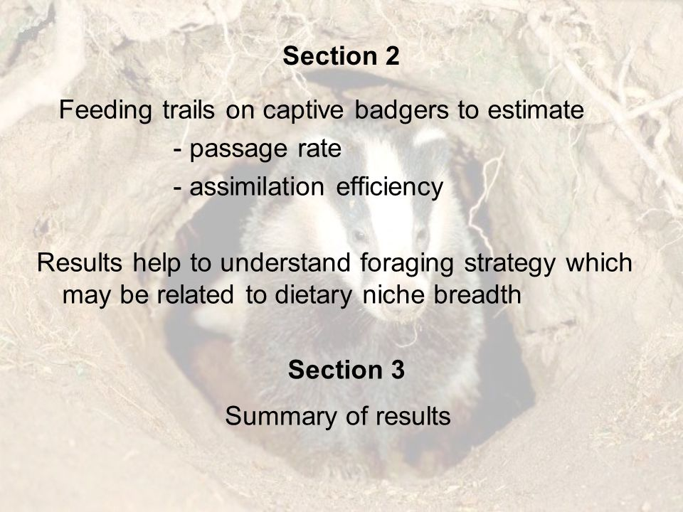 Section 1 What do badgers eat?