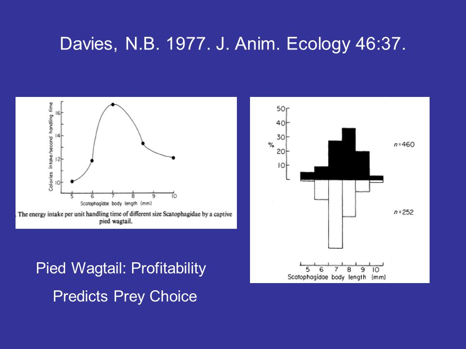 Davies, N.B. 1977. J. Anim. Ecology 46:37. Pied Wagtail: Profitability Predicts Prey Choice