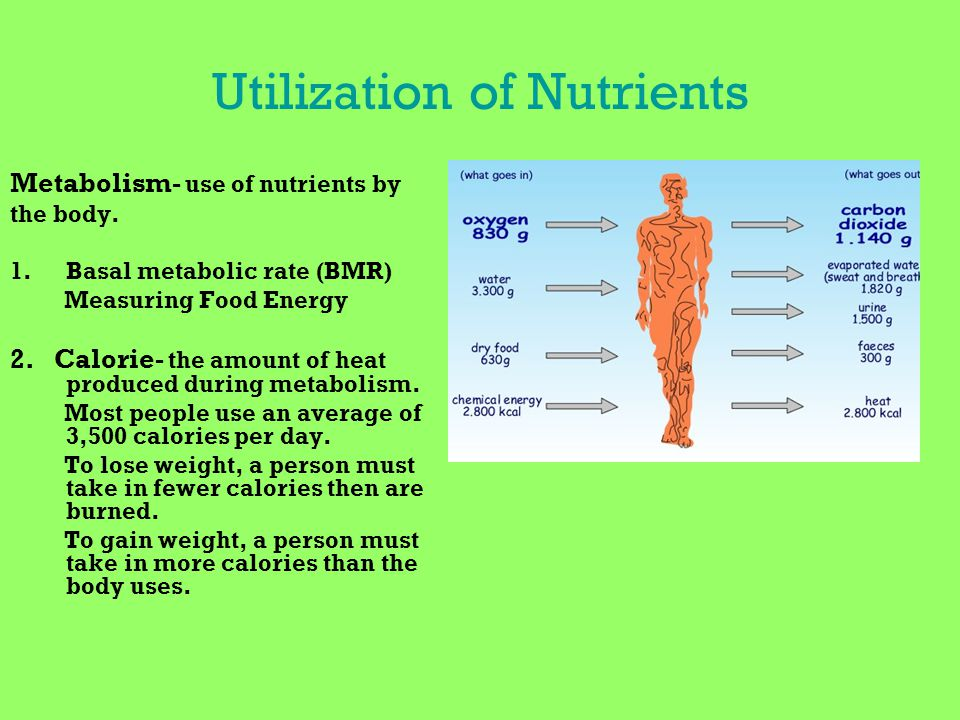 Utilization of Nutrients Metabolism- use of nutrients by the body. 1.Basal metabolic rate (BMR) Measuring Food Energy 2. Calorie- the amount of heat p