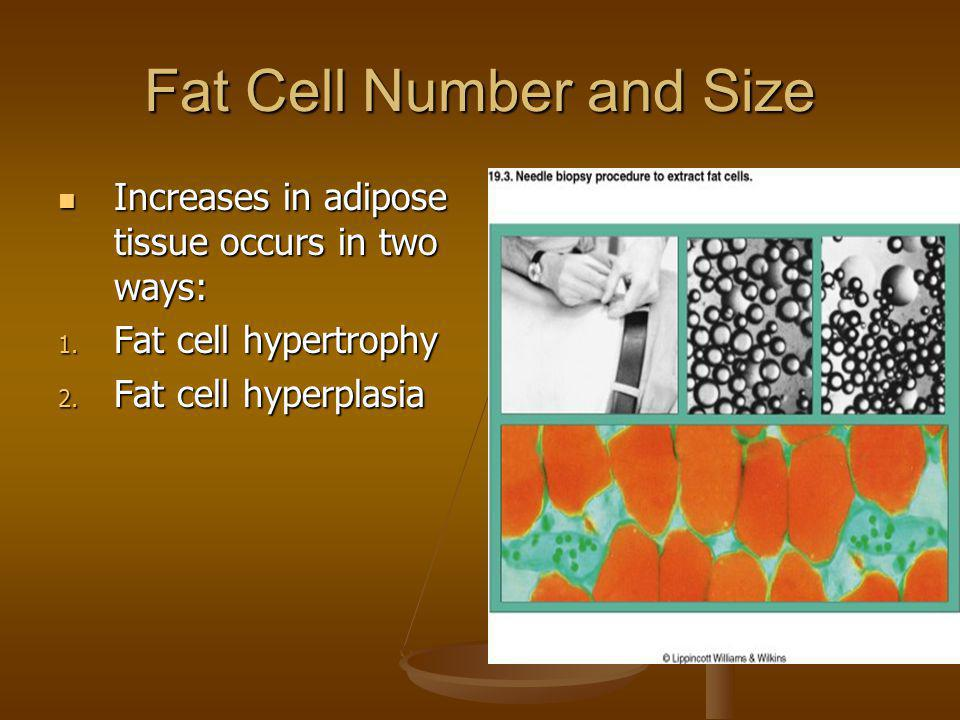 Fat Cell Number and Size Increases in adipose tissue occurs in two ways: Increases in adipose tissue occurs in two ways: 1. Fat cell hypertrophy 2. Fa