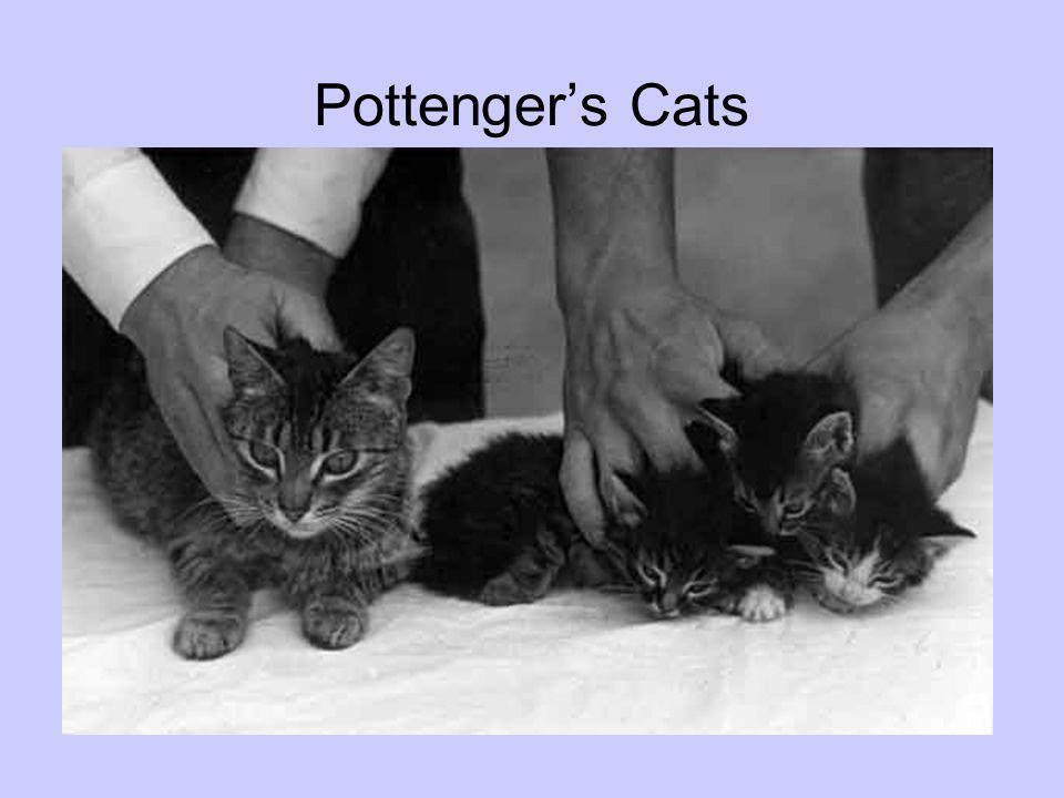 Pottengers Cats