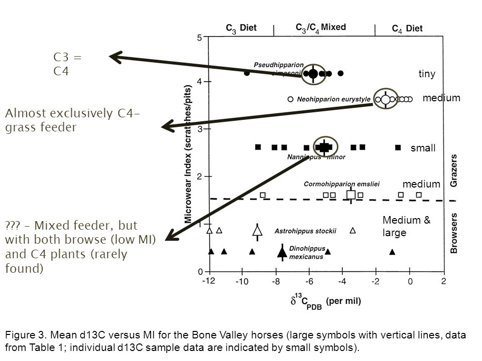 Figure 3. Mean d13C versus MI for the Bone Valley horses (large symbols with vertical lines, data from Table 1; individual d13C sample data are indica