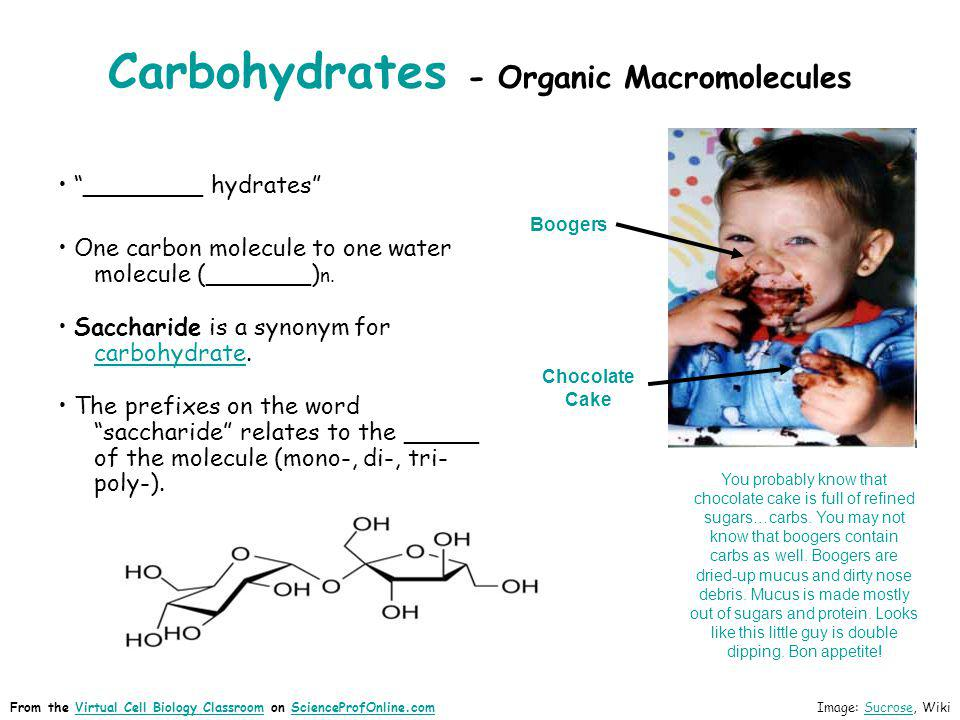 Carbohydrates - Organic Macromolecules ________ hydrates One carbon molecule to one water molecule (_______) n. Saccharide is a synonym for carbohydra