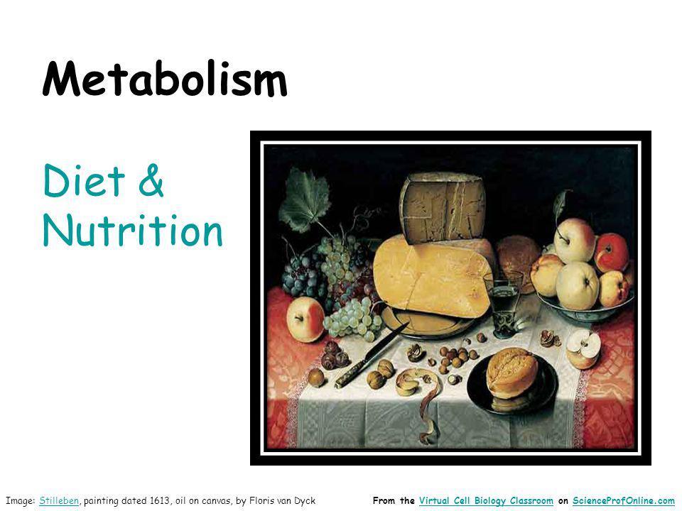 Metabolism Diet & Nutrition Image: Stilleben, painting dated 1613, oil on canvas, by Floris van DyckStillebenFrom the Virtual Cell Biology Classroom o