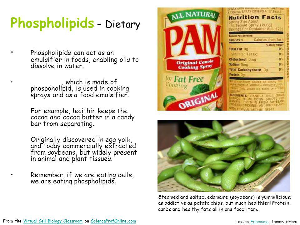 Phospholipids - Dietary Phospholipids can act as an emulsifier in foods, enabling oils to dissolve in water. _______, which is made of phospoholipid,