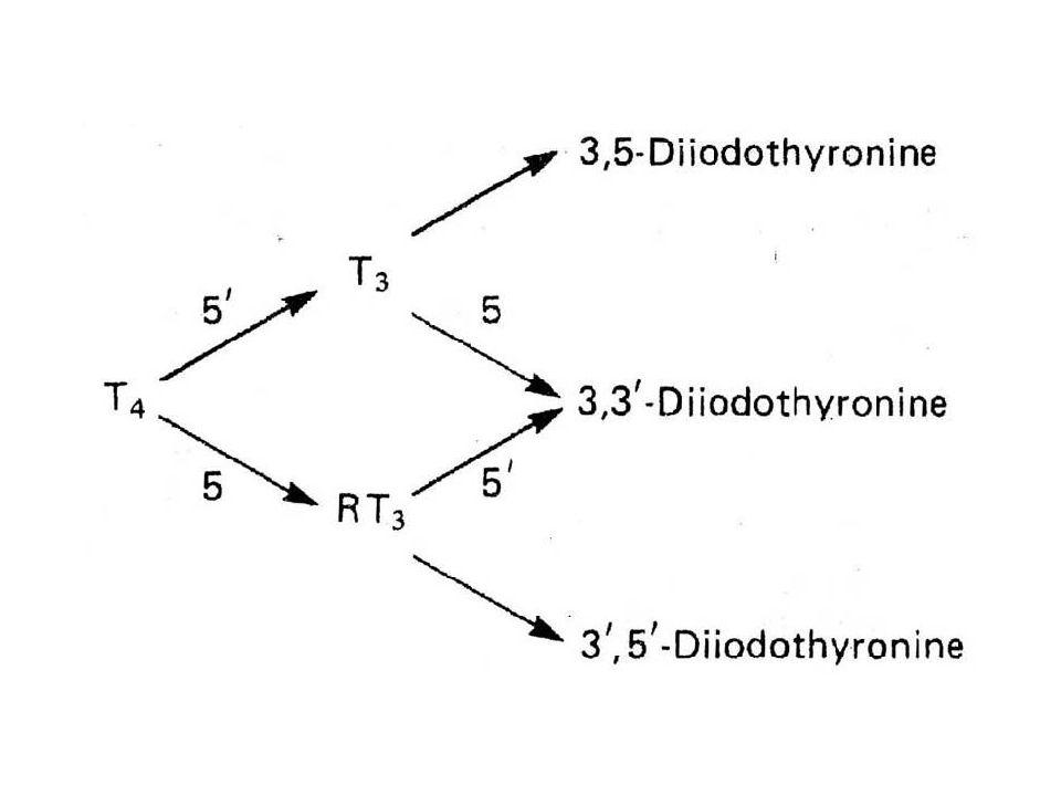 Actions of Thyroid Hormones Thyroid hormones are essential for normal growth of tissues, including the nervous system.