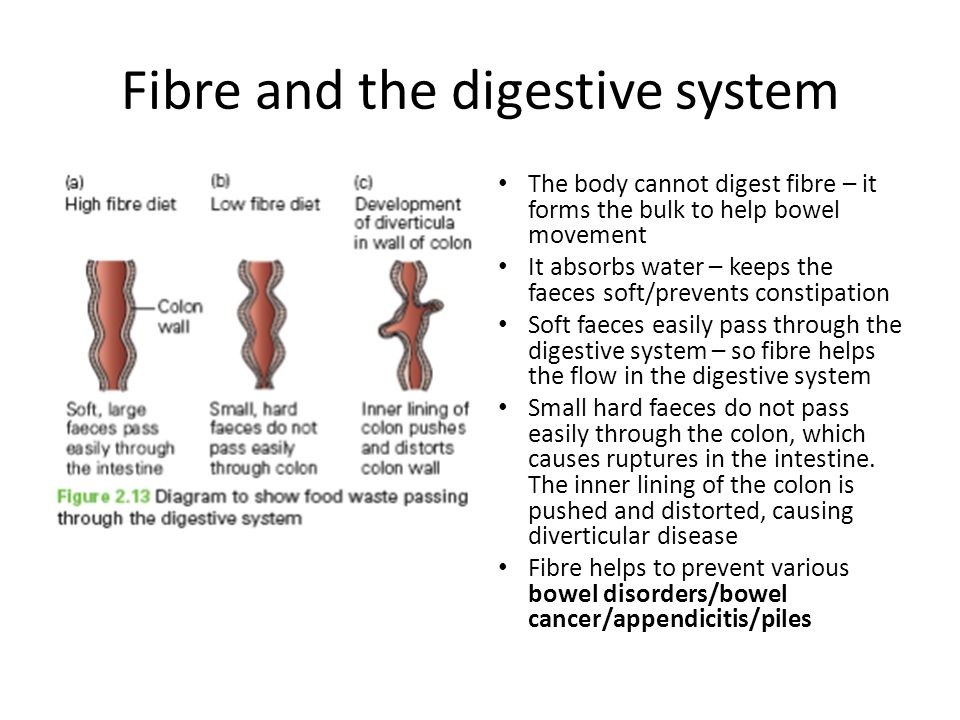 Fibre and the digestive system The body cannot digest fibre – it forms the bulk to help bowel movement It absorbs water – keeps the faeces soft/prevents constipation Soft faeces easily pass through the digestive system – so fibre helps the flow in the digestive system Small hard faeces do not pass easily through the colon, which causes ruptures in the intestine.