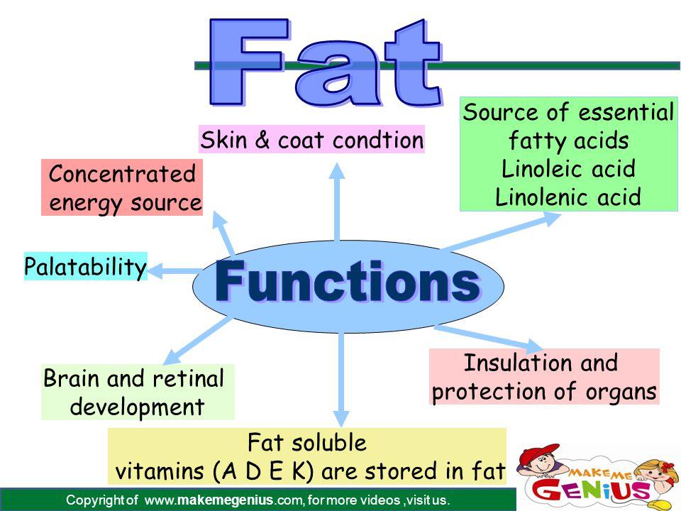 Copyright of www.makemegenius.com, for more videos,visit us. Concentrated energy source Source of essential fatty acids Linoleic acid Linolenic acid F