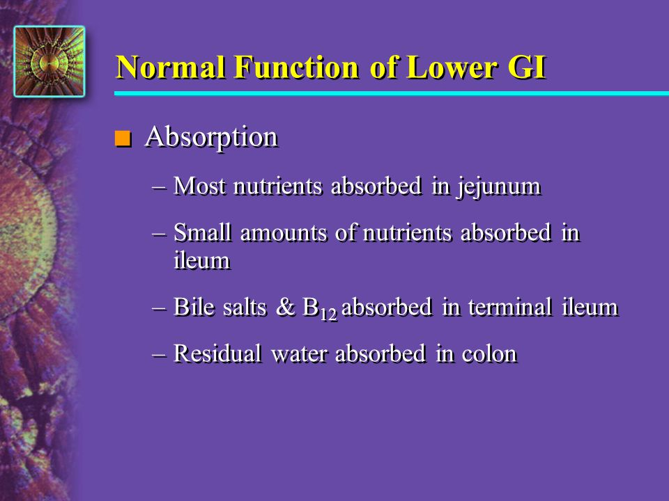 Normal Function of Lower GI n Absorption –Most nutrients absorbed in jejunum –Small amounts of nutrients absorbed in ileum –Bile salts & B 12 absorbed