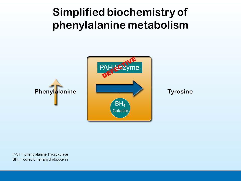 PAH = phenylalanine hydroxylase BH 4 = cofactor tetrahydrobiopterin Simplified biochemistry of phenylalanine metabolism Phenylalanine Tyrosine PAH Enz