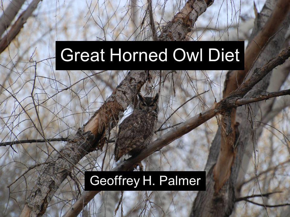 Great Horned Owl Diet Geoffrey H. Palmer