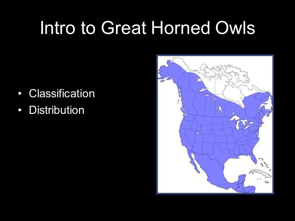 Intro to Great Horned Owls Classification Distribution