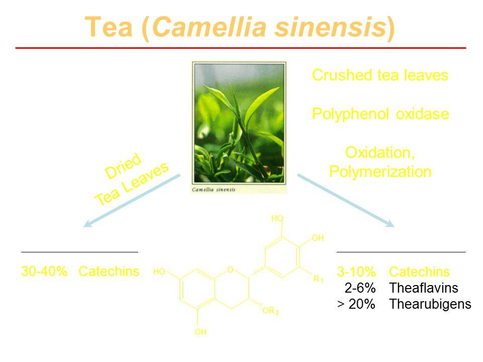 Tea (Camellia sinensis) Green Tea Black Tea 30-40% Catechins 3-6% Caffeine ~310 mg polyphenols per 6 ounces 3-10% Catechins 2-6% Theaflavins > 20% The
