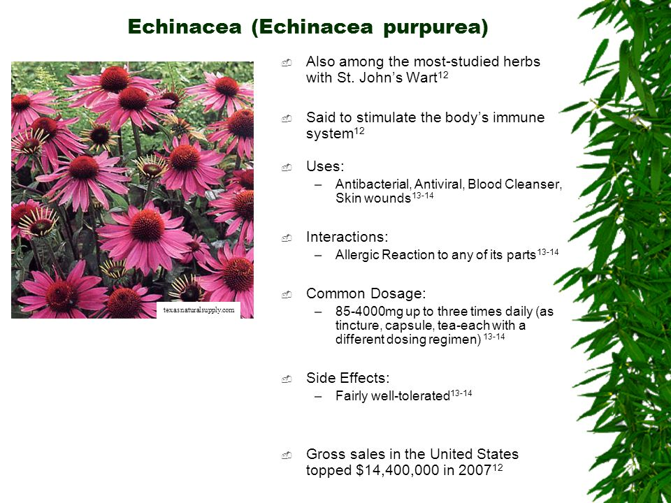 Echinacea (Echinacea purpurea) Also among the most-studied herbs with St. Johns Wart 12 Said to stimulate the bodys immune system 12 Uses: –Antibacter