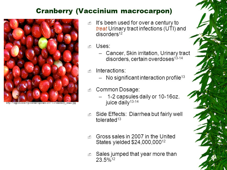 Cranberry (Vaccinium macrocarpon) Its been used for over a century to treat Urinary tract infections (UTI) and disorders 12 Uses: –Cancer, Skin irrita