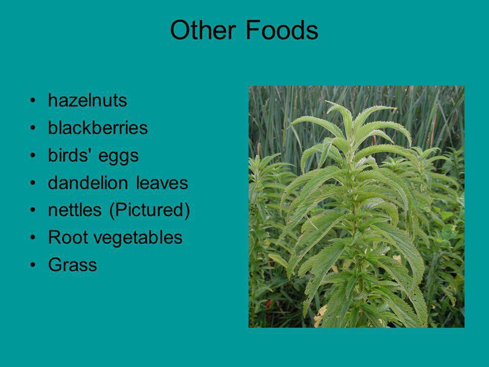 Other Foods hazelnuts blackberries birds eggs dandelion leaves nettles (Pictured) Root vegetables Grass