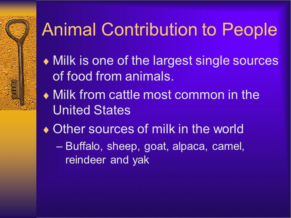 Animal Contribution to People Milk is one of the largest single sources of food from animals.