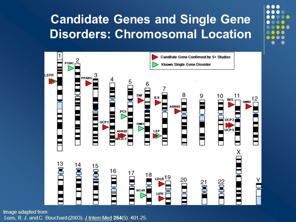 Genetics of Human Obesity Common form(s) of obesity are likely due to complex interactions between genes and environment - body fat pattern - appetite regulation - other pathways Rare monogenic forms do not account for majority of cases