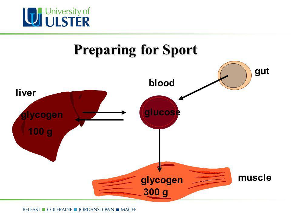 Preparing for Sport blood muscle glycogen liver 100 g 300 g glucose gut