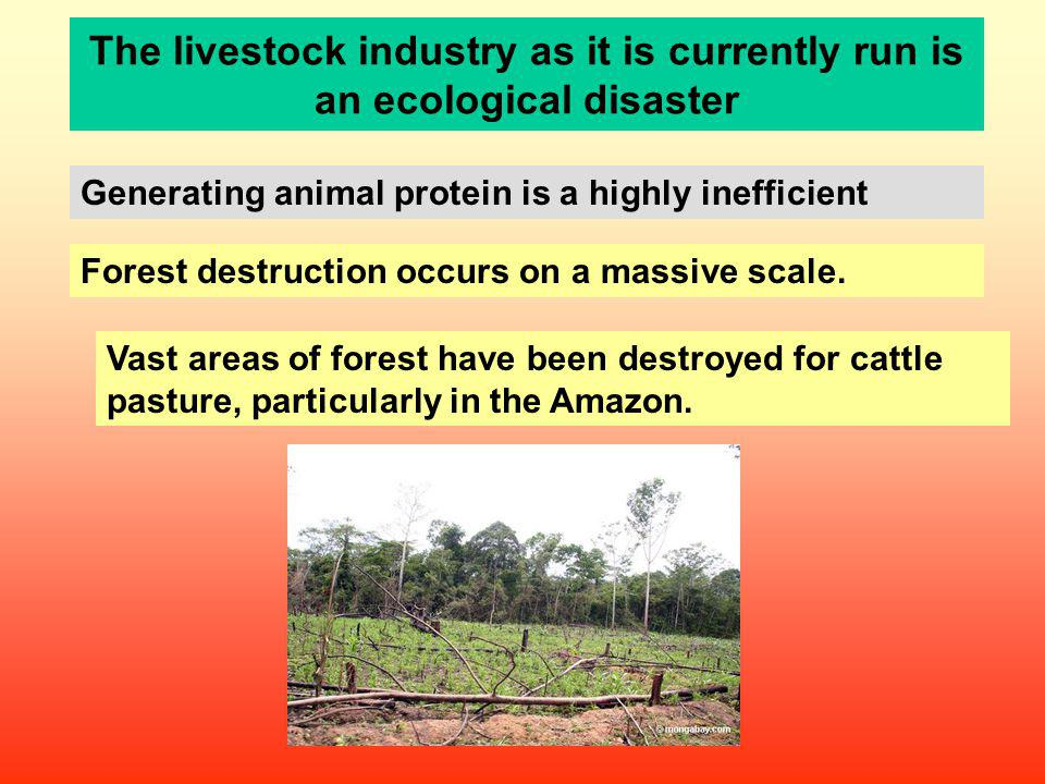 The livestock industry as it is currently run is an ecological disaster Generating animal protein is a highly inefficient Forest destruction occurs on