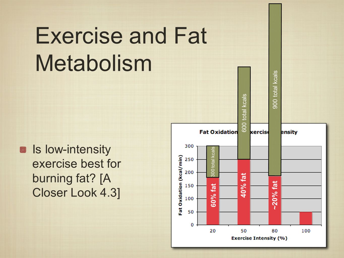 Exercise and Fat Metabolism Is low-intensity exercise best for burning fat.