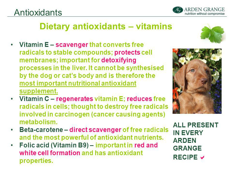 Antioxidants Dietary antioxidants – vitamins Vitamin E – scavenger that converts free radicals to stable compounds; protects cell membranes; important for detoxifying processes in the liver.