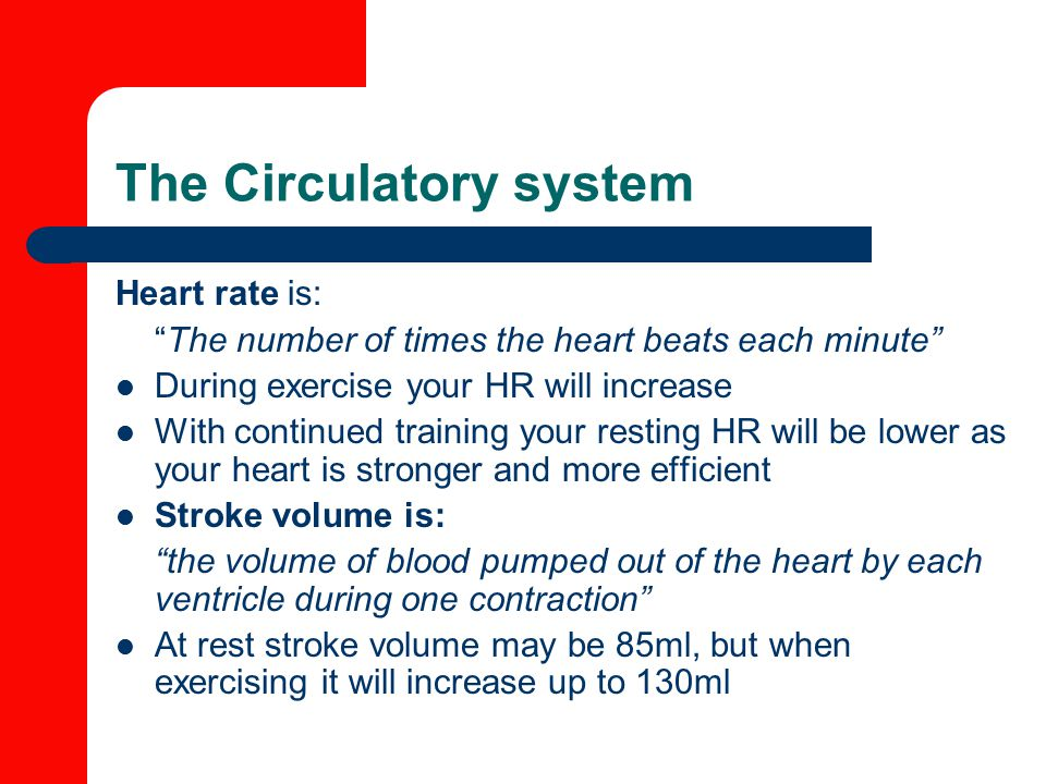 The Circulatory system Heart rate is: The number of times the heart beats each minute During exercise your HR will increase With continued training your resting HR will be lower as your heart is stronger and more efficient Stroke volume is: the volume of blood pumped out of the heart by each ventricle during one contraction At rest stroke volume may be 85ml, but when exercising it will increase up to 130ml