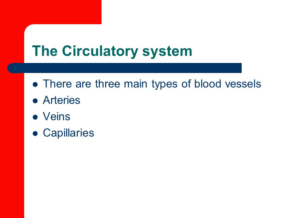 The Circulatory system There are three main types of blood vessels Arteries Veins Capillaries