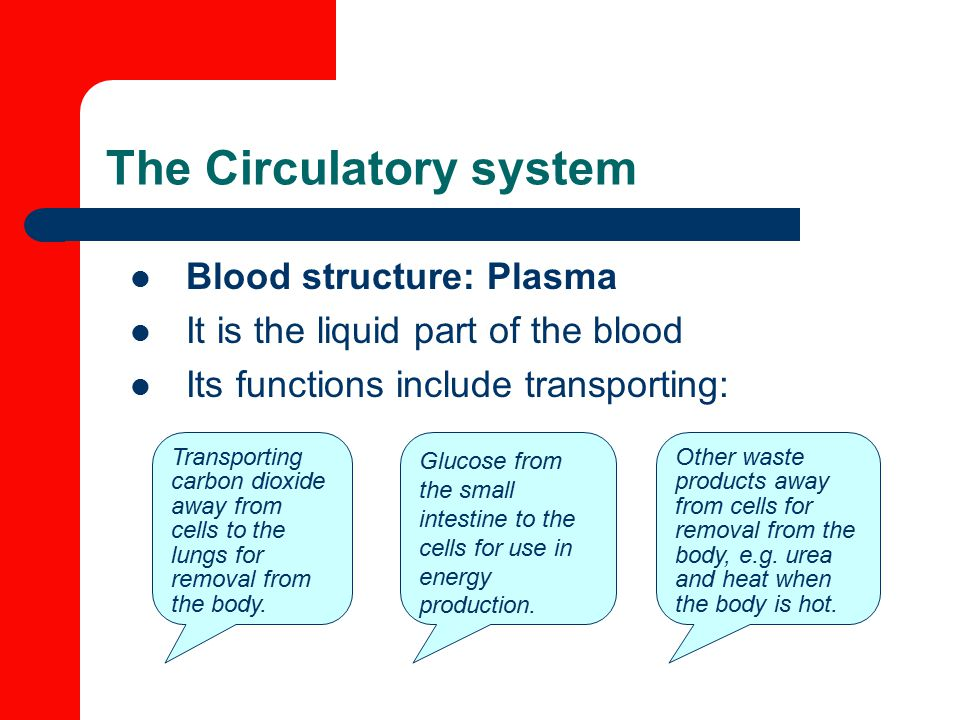 The Circulatory system Blood structure: Plasma It is the liquid part of the blood Its functions include transporting: Glucose from the small intestine to the cells for use in energy production.