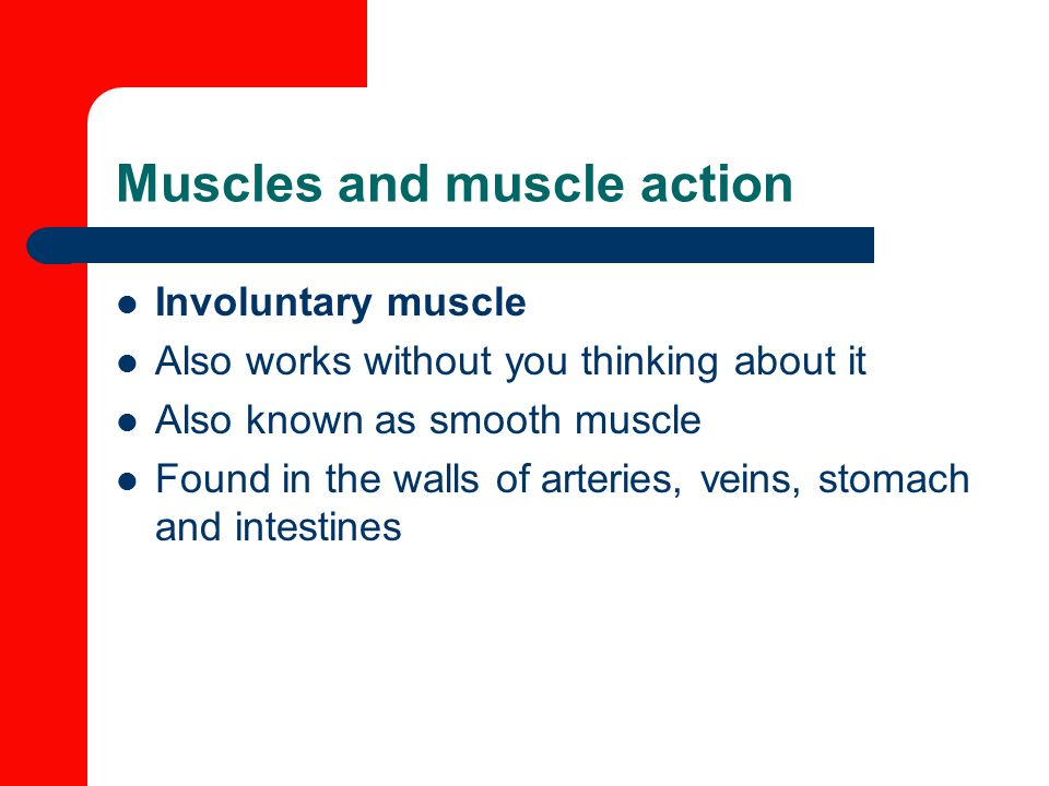 Muscles and muscle action Involuntary muscle Also works without you thinking about it Also known as smooth muscle Found in the walls of arteries, veins, stomach and intestines