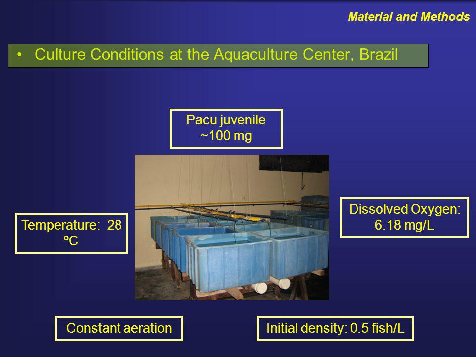 Material and Methods Culture Conditions at the Aquaculture Center, Brazil Initial density: 0.5 fish/LConstant aeration Temperature: 28 ºC Dissolved Oxygen: 6.18 mg/L Pacu juvenile ~100 mg