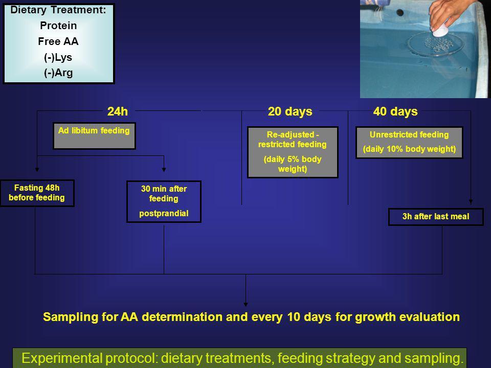 DISPENSABLE AMINO ACID postprandial analysis – 30 min.