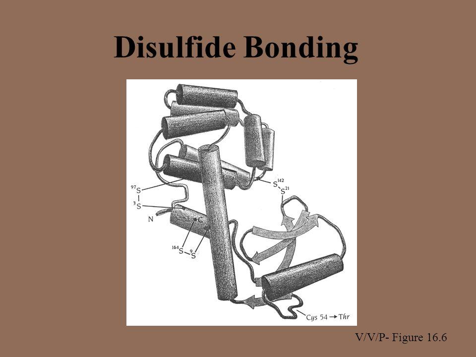 Disulfide Bonding V/V/P- Figure 16.6