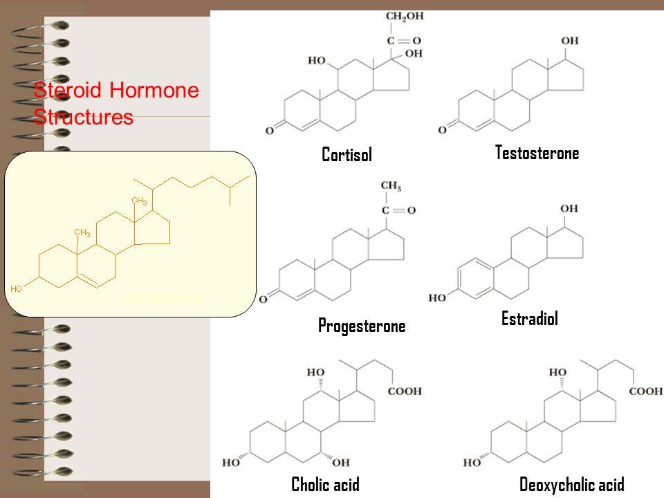 Cortisol Testosterone Progesterone Estradiol Cholic acidDeoxycholic acid Steroid Hormone Structures cholesterol