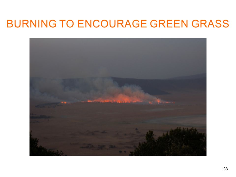 BURNING TO ENCOURAGE GREEN GRASS 38
