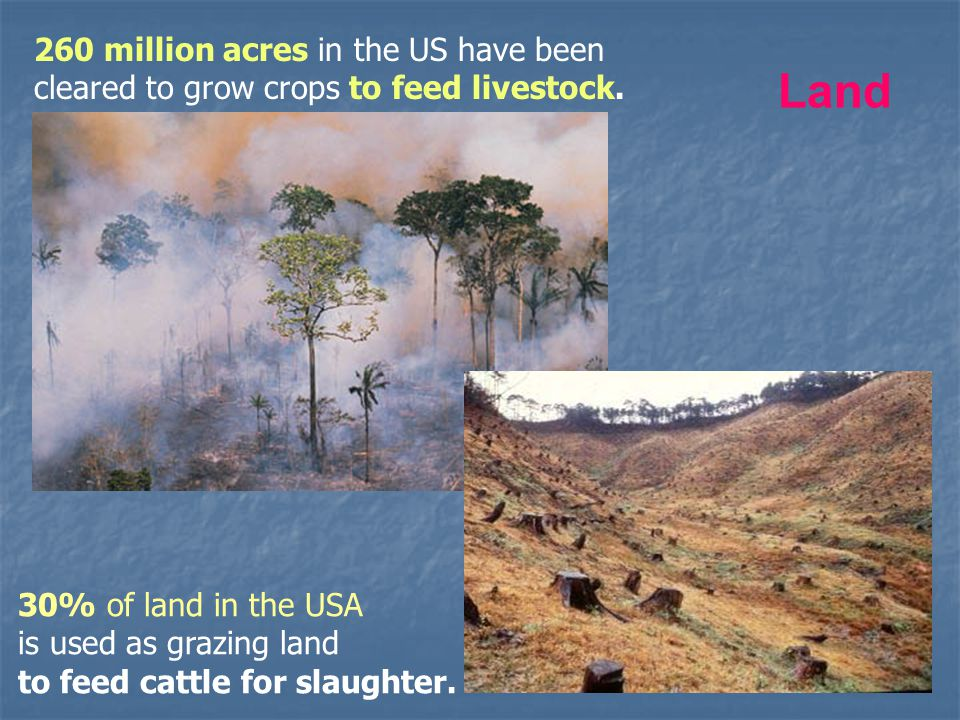 Land 260 million acres in the US have been cleared to grow crops to feed livestock. 30% of land in the USA is used as grazing land to feed cattle for