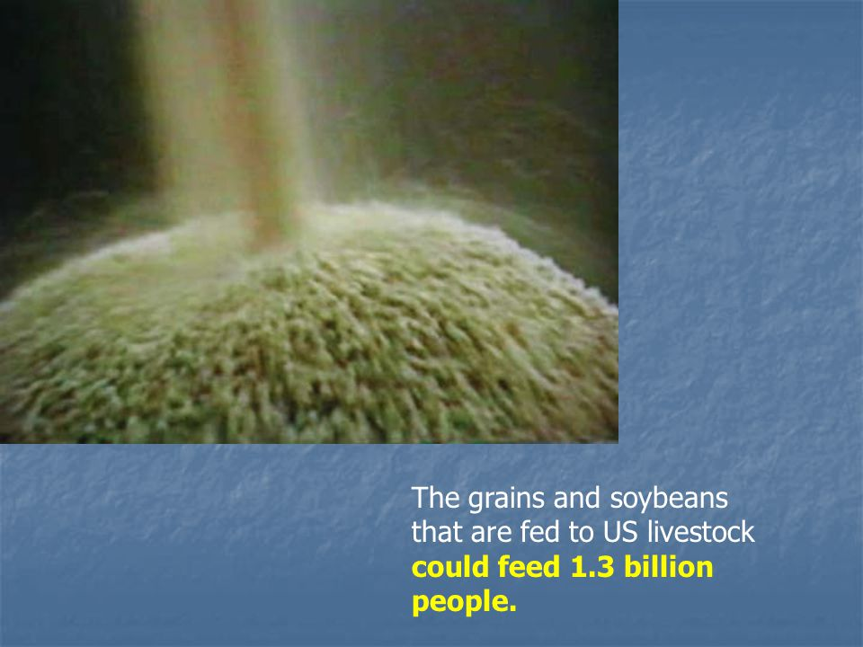 The grains and soybeans that are fed to US livestock could feed 1.3 billion people.