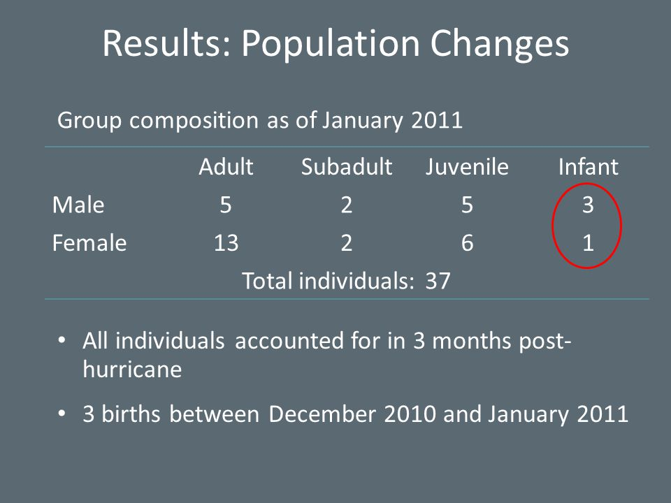 AdultSubadultJuvenileInfant Male5253 Female13261 Total individuals: 37 All individuals accounted for in 3 months post- hurricane 3 births between December 2010 and January 2011 Results: Population Changes Group composition as of January 2011