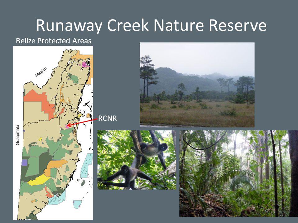 Runaway Creek Nature Reserve Belize Protected Areas RCNR