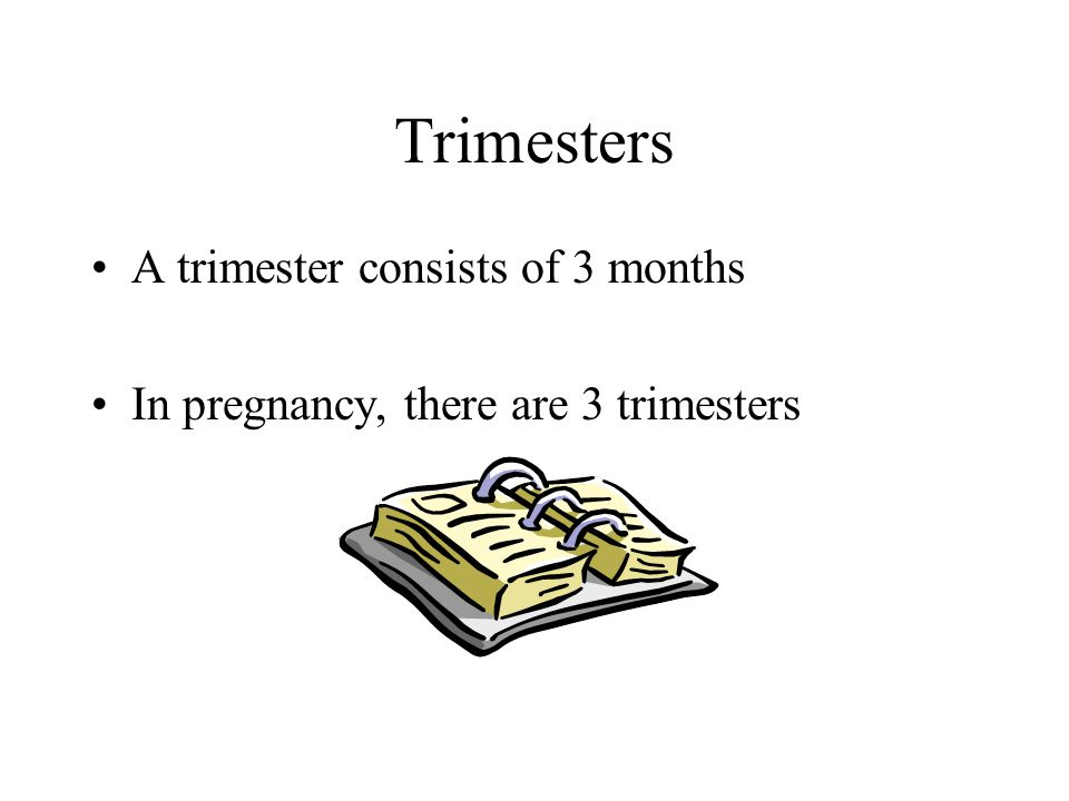 Trimesters A trimester consists of 3 months In pregnancy, there are 3 trimesters