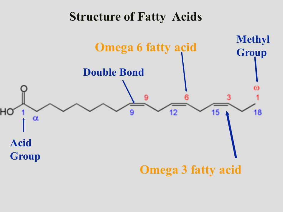 Acid Group Methyl Group Omega 3 fatty acid Omega 6 fatty acid Structure of Fatty Acids Double Bond