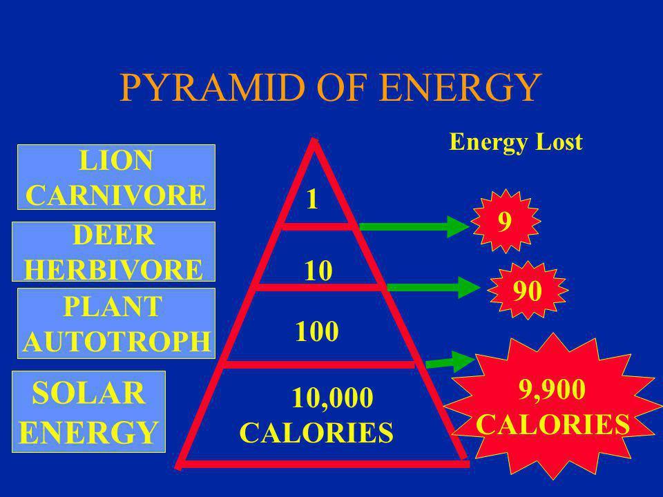PYRAMID OF ENERGY SOLAR ENERGY PLANT AUTOTROPH DEER HERBIVORE LION CARNIVORE 1 10 100 10,000 CALORIES 9,900 CALORIES 90 9 Energy Lost