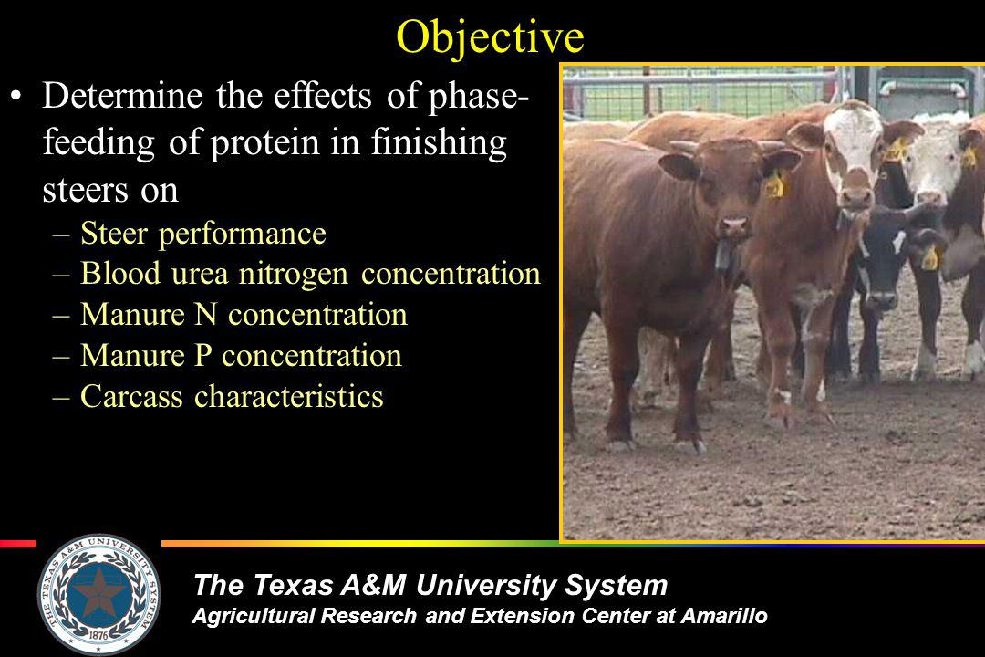 The Texas A&M University System Agricultural Research and Extension Center at Amarillo Objective Determine the effects of phase- feeding of protein in finishing steers on –Steer performance –Blood urea nitrogen concentration –Manure N concentration –Manure P concentration –Carcass characteristics