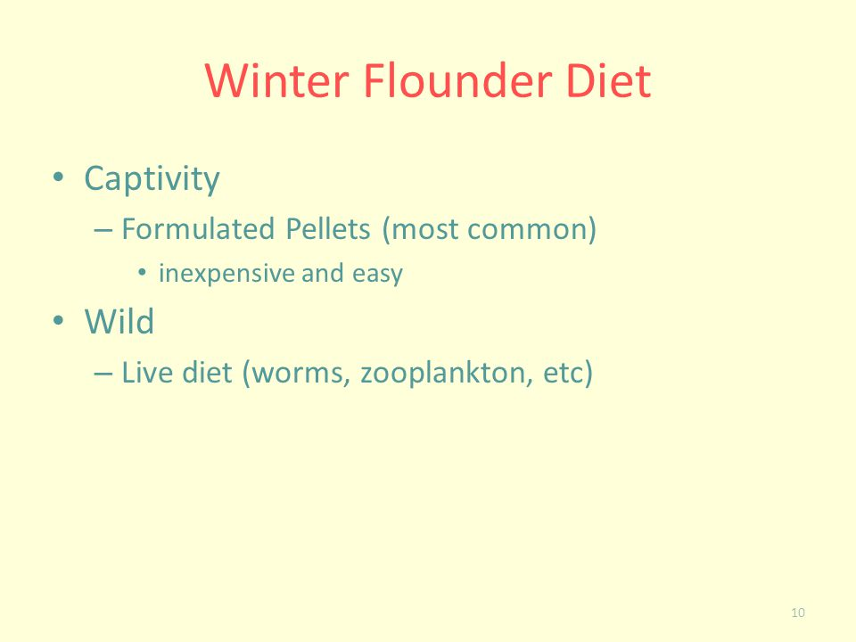 Winter Flounder Diet Captivity – Formulated Pellets (most common) inexpensive and easy Wild – Live diet (worms, zooplankton, etc) 10