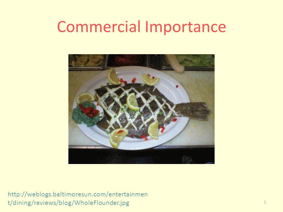 Commercial Importance 5 http://weblogs.baltimoresun.com/entertainmen t/dining/reviews/blog/WholeFlounder.jpg