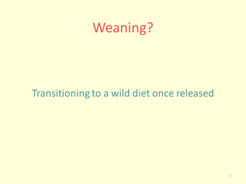 Weaning? Transitioning to a wild diet once released 9